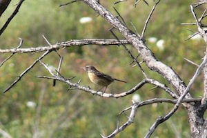 b&b-cas-al-cubo-bird-watching-algarve.jpg