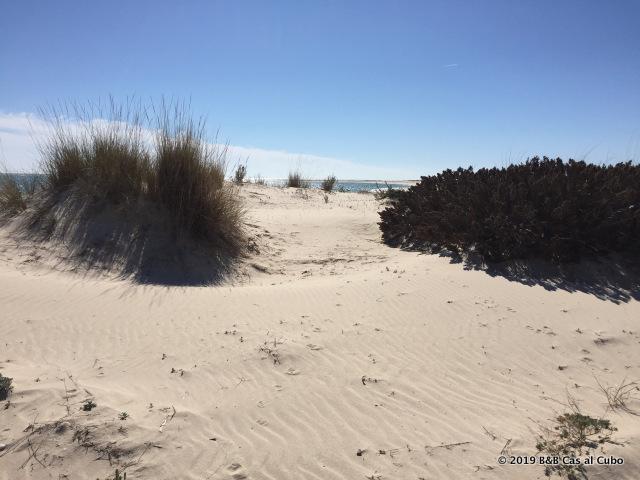 Ilha da Armona Algarve Duinen
