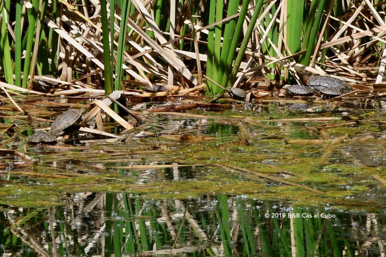 Schildpadden kolonie