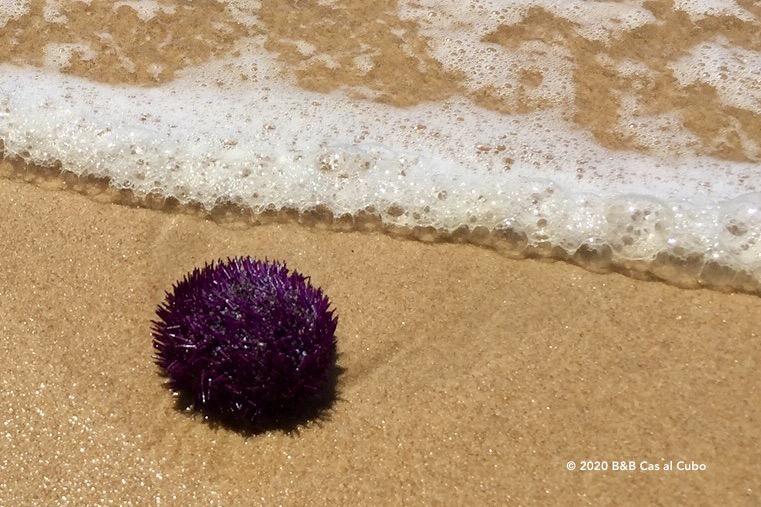 Zee-egel op het strand van Manta Rota