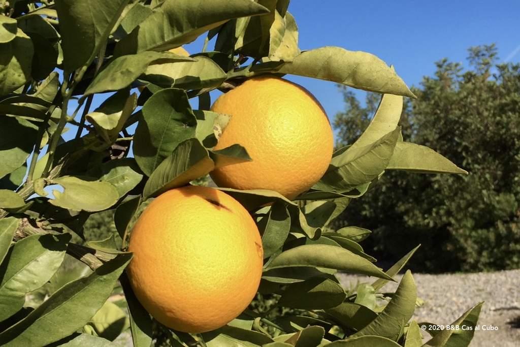 Sinaasappels van B&B Cas al Cubo