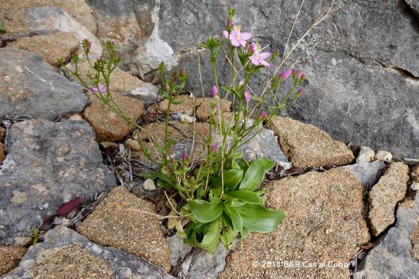 wandelen-gids-wilde-bloemen