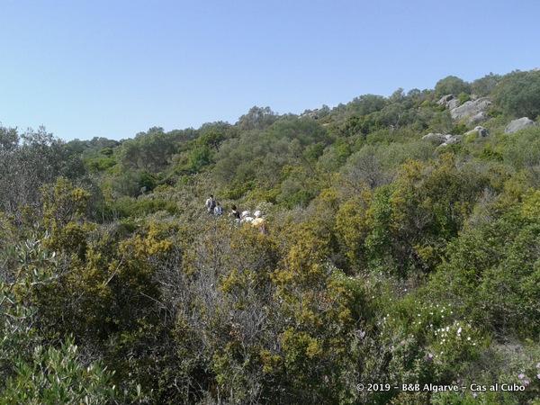 Cerro do Cabeça